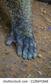 Baboon Hand on the ground