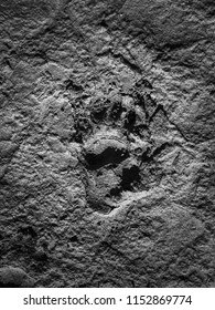 Baboon Monkey footprint