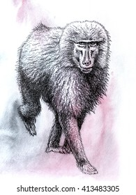 Baboon water color