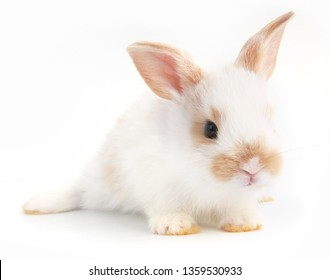 Baby adorable rabbit on white background. Young cute bunny in many action and color. Lovely pet with fluffy hair. Easter has rabbit as symbol celebration. White and brown dot rabbit