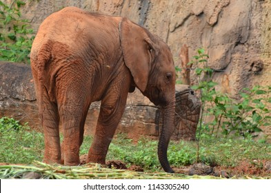 Baby African Elephan in zoo.
