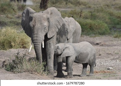 Baby African elephant in Serengeti National Park, Tanzania