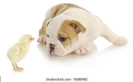 Dog Bully Images, Stock Photos & Vectors | Shutterstock