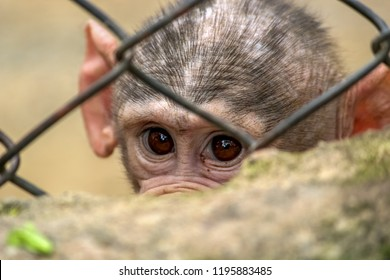 Baby baboon behind the cage
