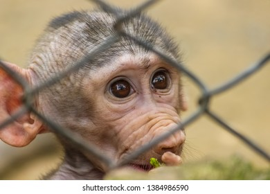 A baby baboon newly born behind the bars of zoo