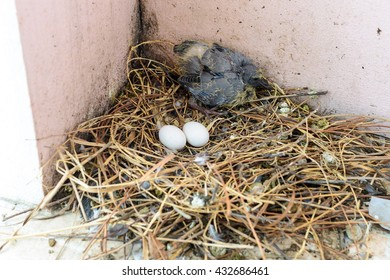 Baby bird and egg in nest