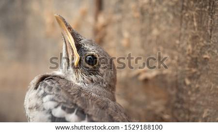 baby-bird-few-feathers-looking-450w-1529