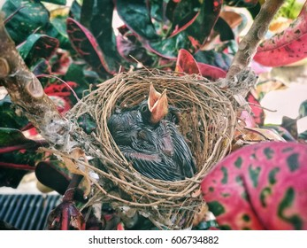 Baby bird hungry in a nest