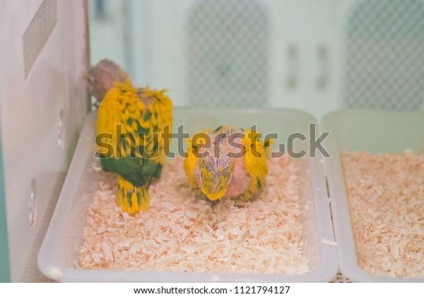 baby bird, Newborn bird
