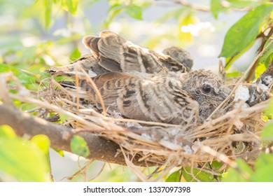 baby bird on nest in the nature and sun
