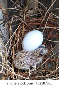 baby birds and egg in nest