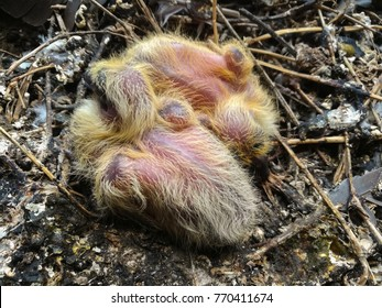 Baby birds in the nest.