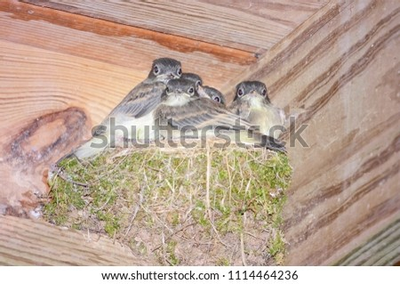 Baby birds in a nest waiting to be fed.