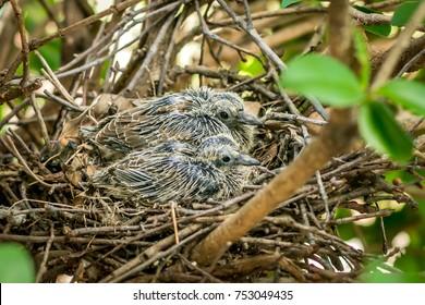Baby birds in the nests.
