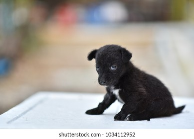 Baby black dog sick siting blurred background.