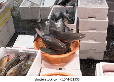 Baby Blacktip Sharks sold in a basket - Shilin Night Market, Taipei - Taiwan