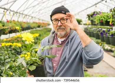 Baby boomer age man portrait focusing glasses while selecting plant in greenhouse