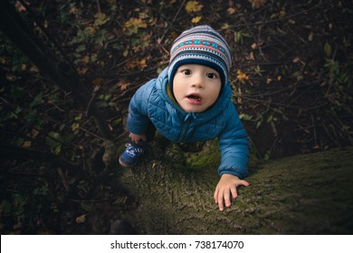baby boy climbing a tree in autumn forest and looking up at camera, surprised baby boy