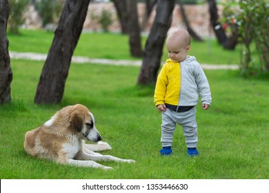 Baby boy with a dog on green grass