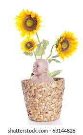 baby boy in sunflowers on white