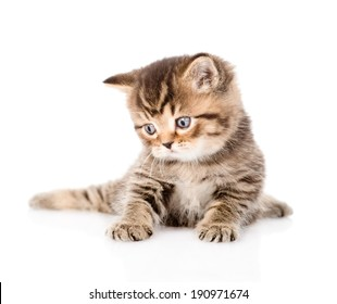 baby british tabby kitten looking away. isolated on white background