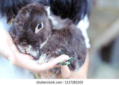 Baby Bunny in her hands