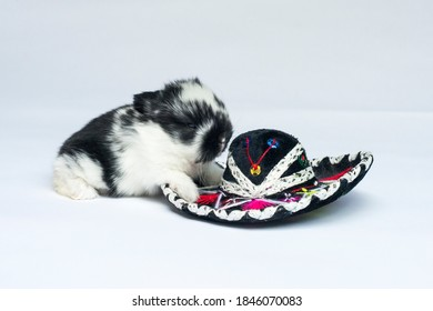Baby Bunny With a Sombrero