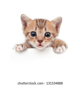Baby cat in paper side  isolated