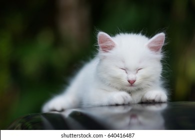 228 521 Baby Baby Cat Images Royalty Free Stock Photos On Shutterstock