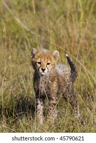 Baby Cheetah Images Stock Photos Vectors Shutterstock