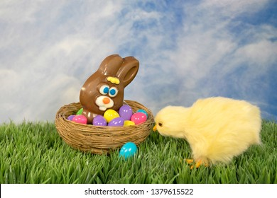 baby chick and colorful eggs with chocolate Easter bunny in nest