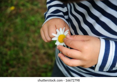 A baby child discovering a daisy