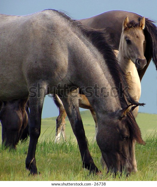 Baby colt with mare in pasture