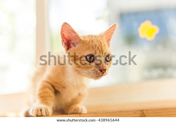 Baby Cute Cat Beautiful Stock Photo Edit Now 438965644