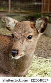 "a baby deer ""bambi"""
