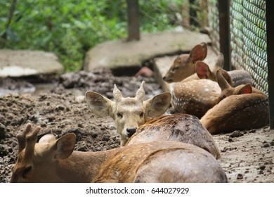 baby Deer looking