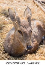 baby deer on haystack