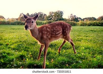Baby deer in the park