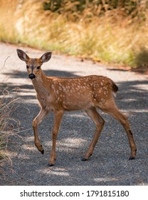 Baby deer spotted in British Columbia, Canada