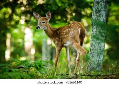 Baby Deer standing in tree forest