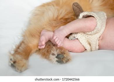Baby and Dog Feet Puppy Little Toes Paws Fur Cute Newborn FEet