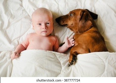 baby and dog lying sheltered blanket