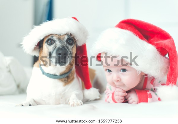 Baby and dog wearing Santa's hat Christmas white background