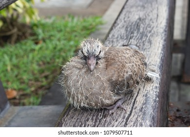 Baby dove on wooden bench
