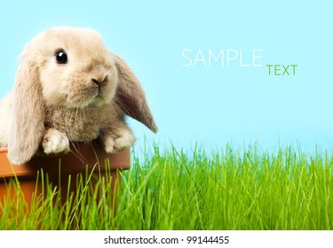 baby Easter bunny on spring green grass