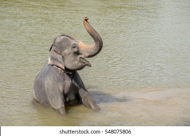 Baby elephant bathing in the river, Kanchanaburi, Thailand
