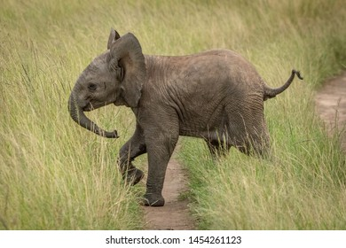 Baby elephant crosses track in long grass