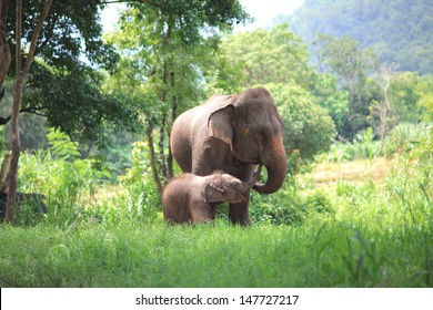 Elephant Eating Images, Stock Photos & Vectors | Shutterstock