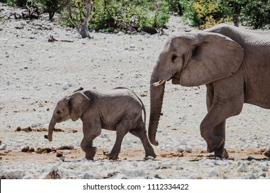 baby elephant followed by it's mother