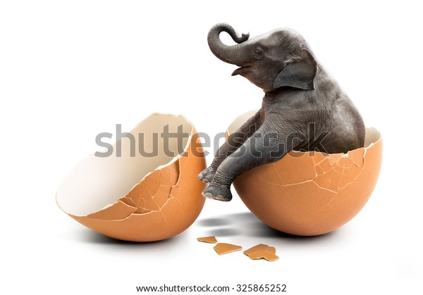 Baby elephant hatch from internal eggshell in concept of new mammal life isolated on white background